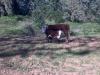 2012-05-08_17-25-09_872