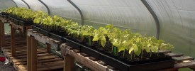 Produce and Plant Starts